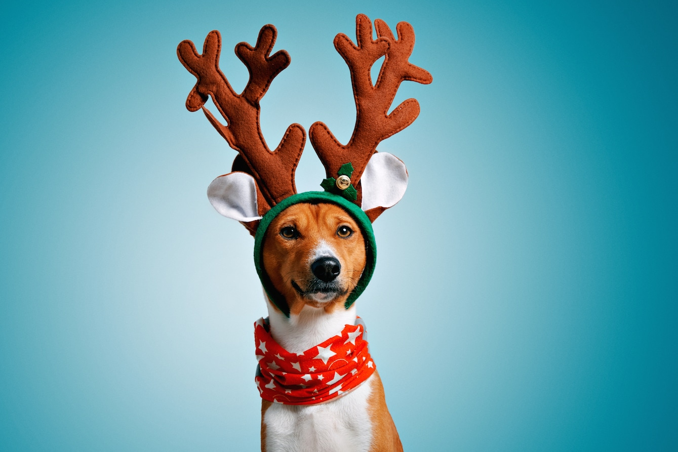 campañas de Navidad con perros